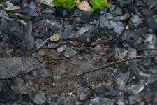 Zemina pod Carbomulčem si dokáže udržet vláhu i bez častého zalévání