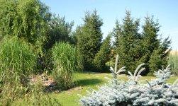 Působivé lesní zákoutí lze vytvořit i na zahradě