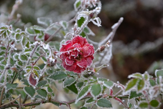 Rozkvetlá zima